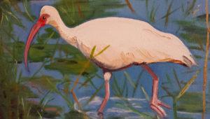 FLORIDA QUARTET - Ibis