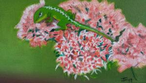FLORIDA QUARTET - Lizard